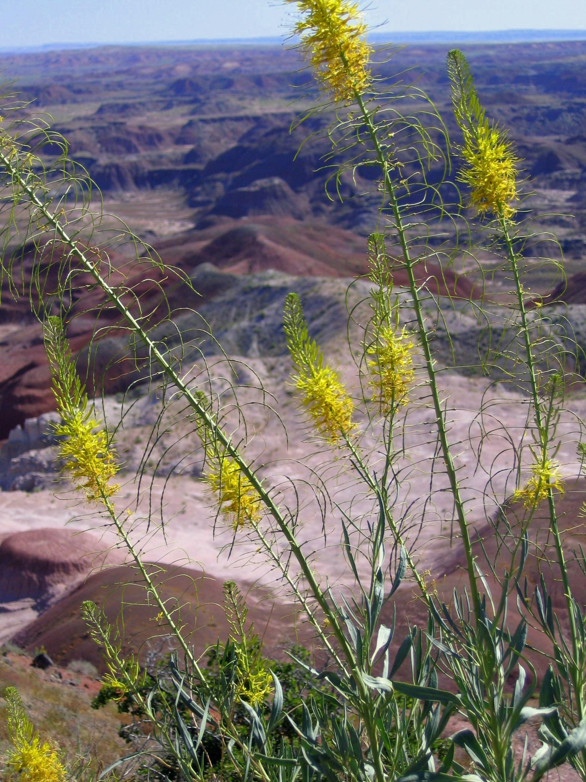 Yellow Flowers Painted Desert